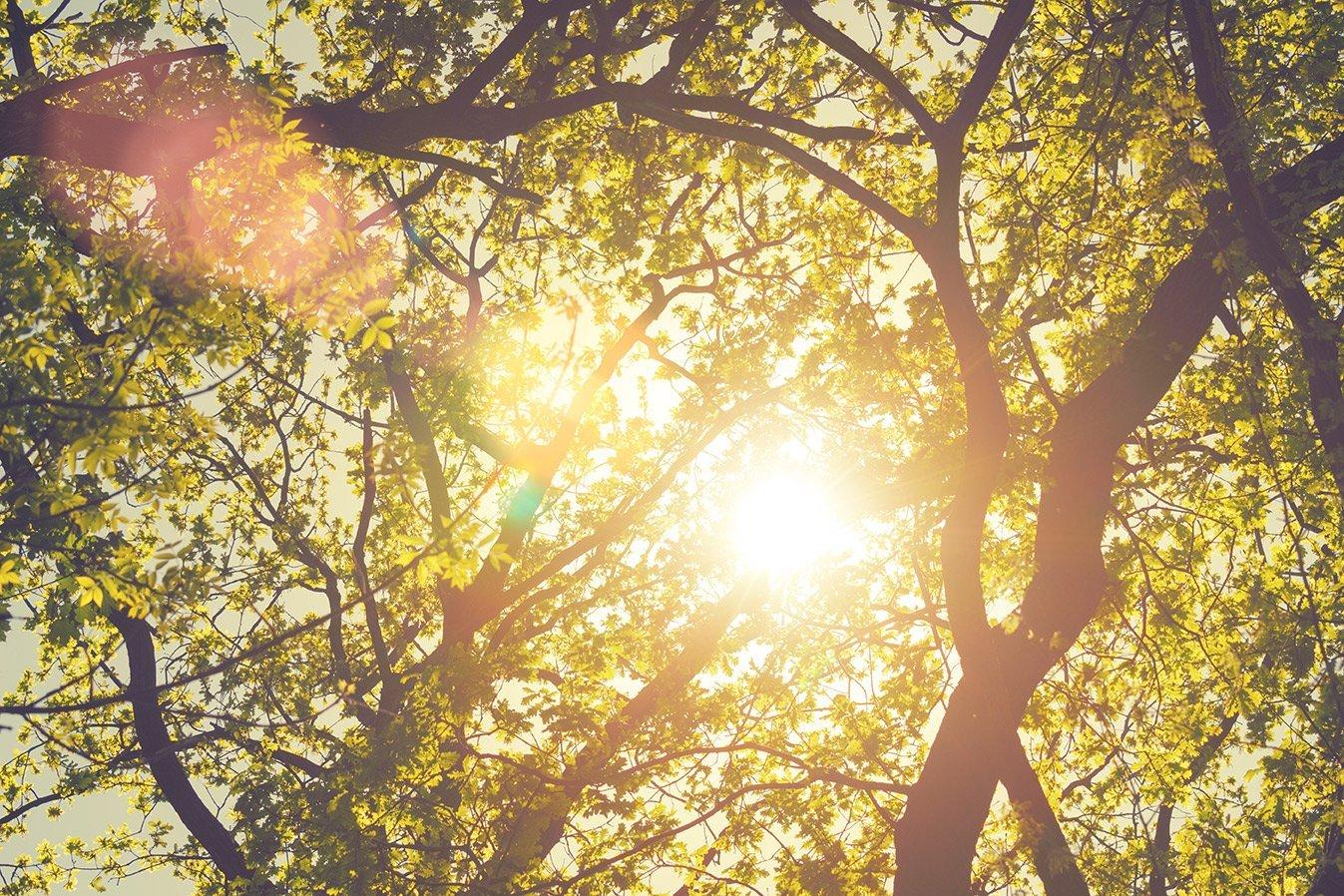 alberi e sole che si intravede