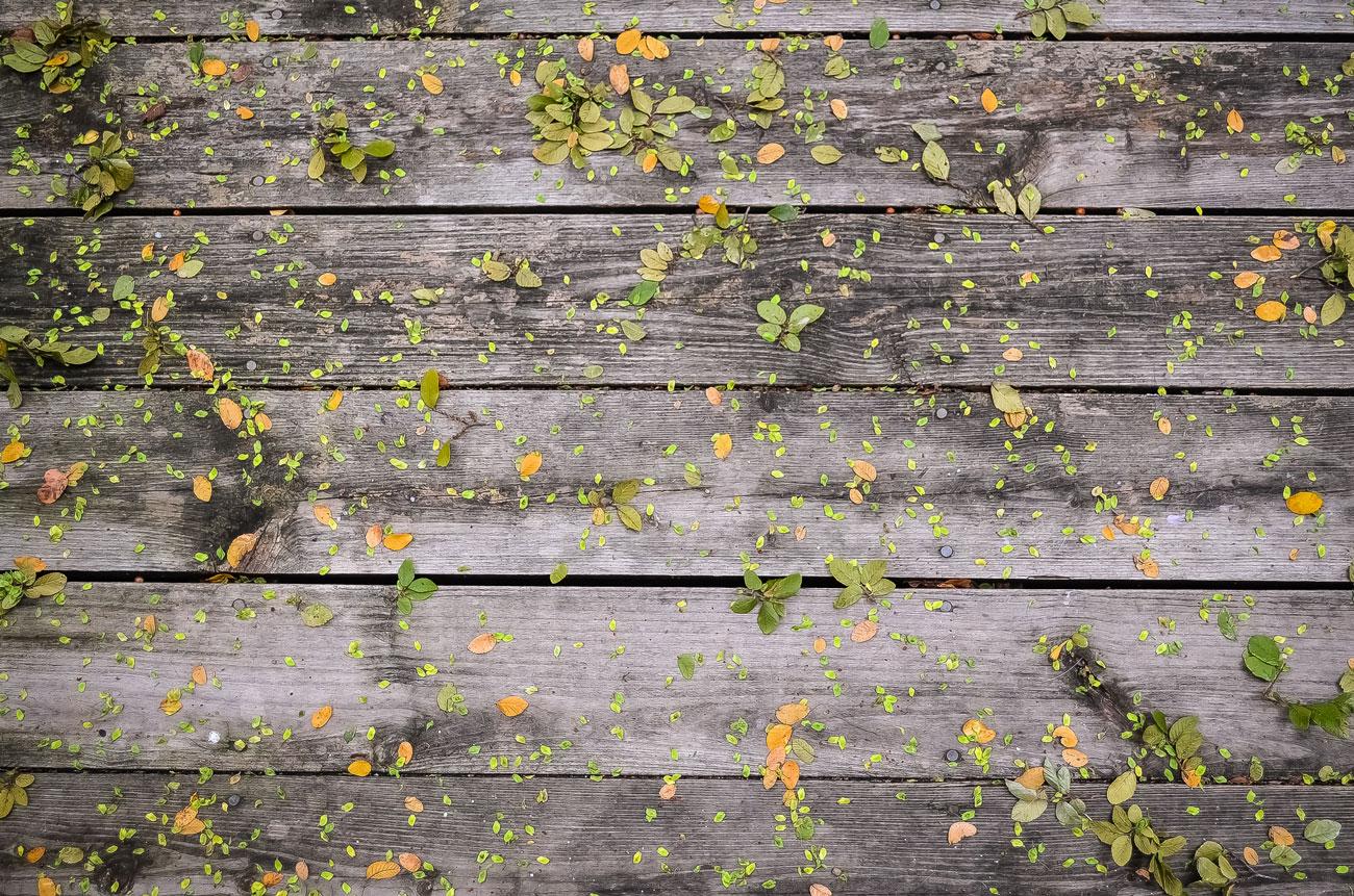 autumn websites